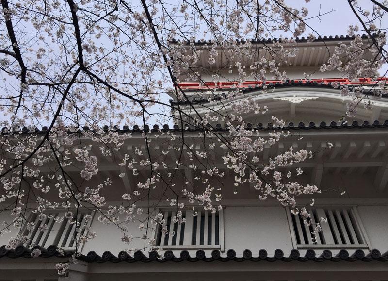 千秋公園で のんと観桜散歩_e0162117_17562977.jpg