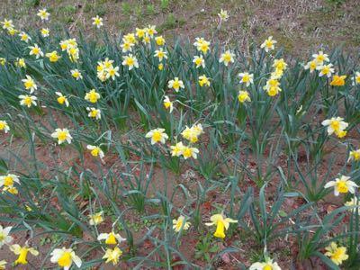 お花見最終日_f0170422_21183935.jpg
