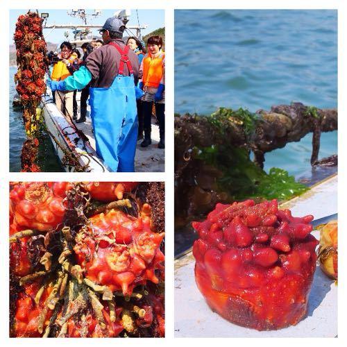 漁船で食べる獲れたてもぎたてのホヤはやっぱり美味かった_c0060143_9152077.jpg