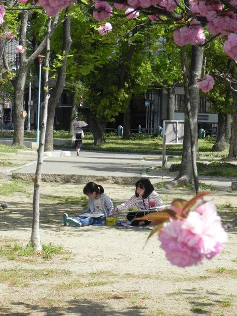 八重桜で写生会_d0076558_5523674.jpg