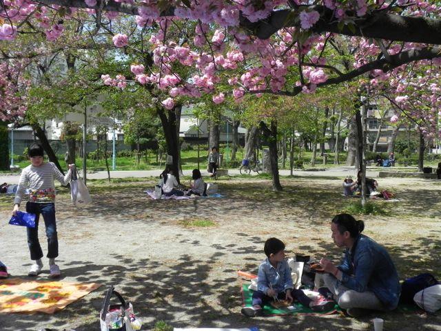 八重桜で写生会_d0076558_6142020.jpg