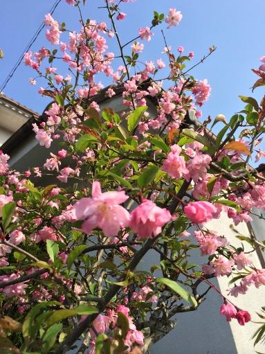 日本の春_b0100062_8191193.jpg