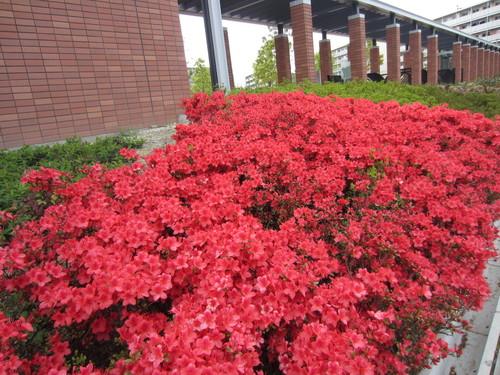 春の雨がまたそぼ降る_f0256164_10485438.jpg