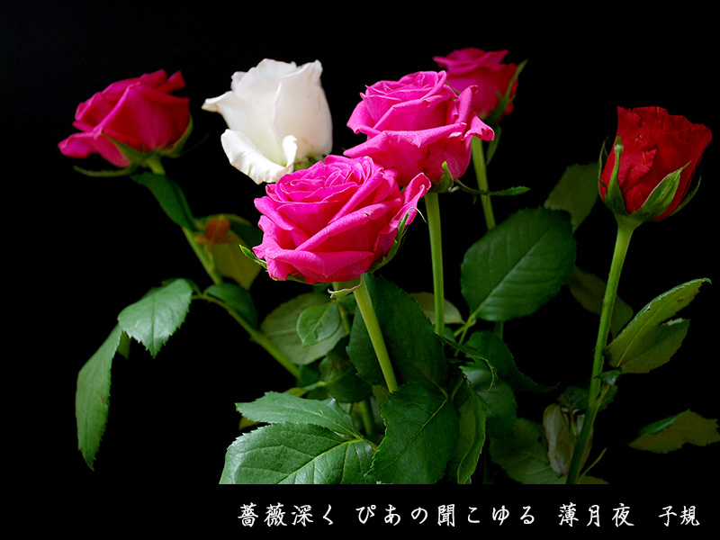 c0009981_328110.jpg