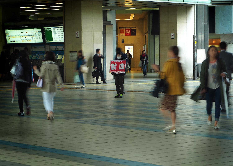 石川のキジ_e0254493_1564974.jpg