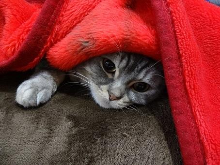 多肉とお久しぶりの猫たち。。_c0178104_08154382.jpg