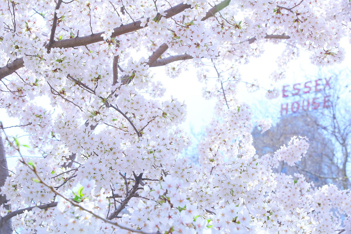 2015春の陣_a0274805_05330603.jpg