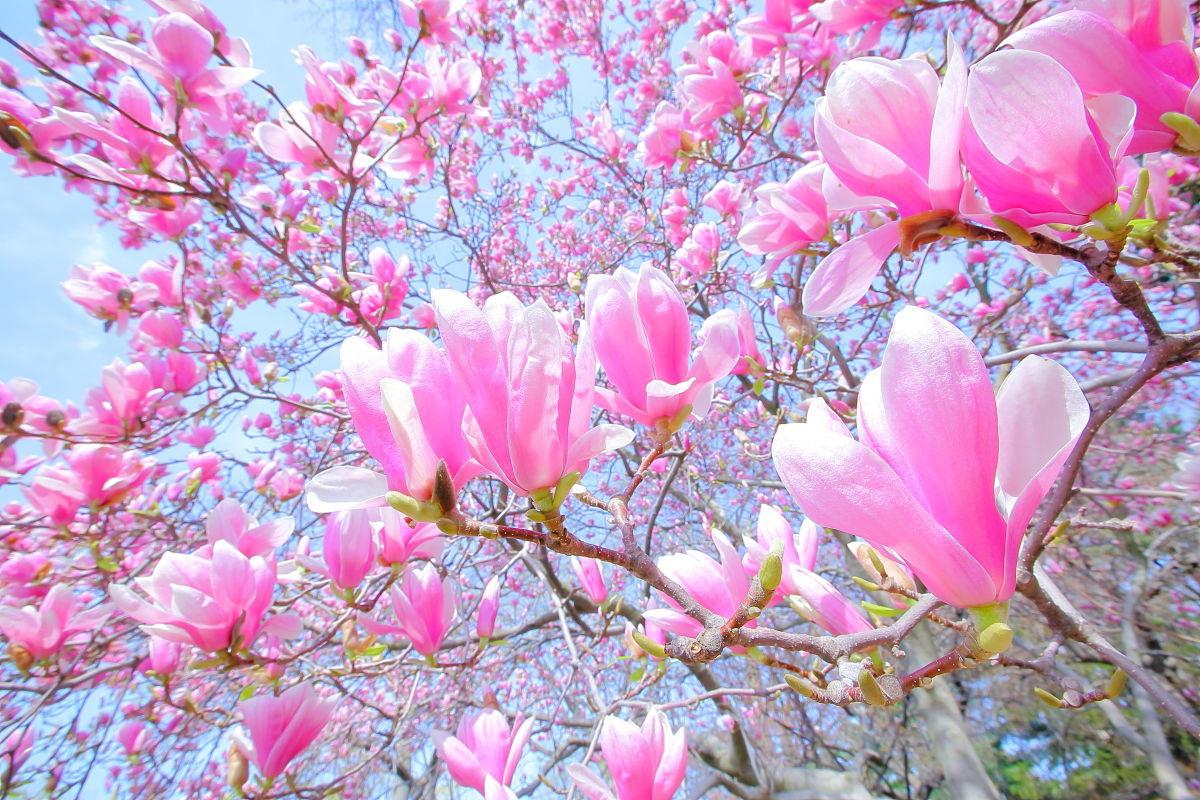 ピンクの魔法_a0274805_22195435.jpg