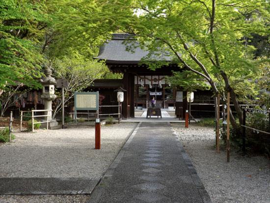 新緑が始まった 梨の木神社_e0048413_98507.jpg