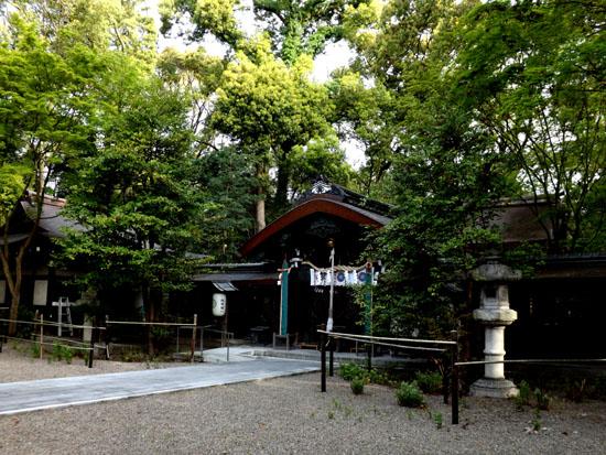 新緑が始まった 梨の木神社_e0048413_991562.jpg