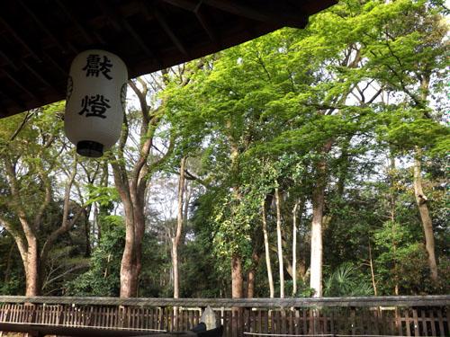 新緑が始まった 梨の木神社_e0048413_992619.jpg