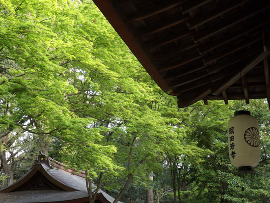 新緑が始まった 梨の木神社_e0048413_993869.jpg