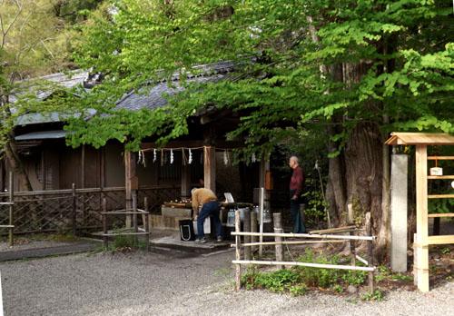 新緑が始まった 梨の木神社_e0048413_9950100.jpg
