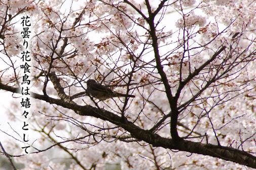 花曇り_e0099713_2140057.jpg