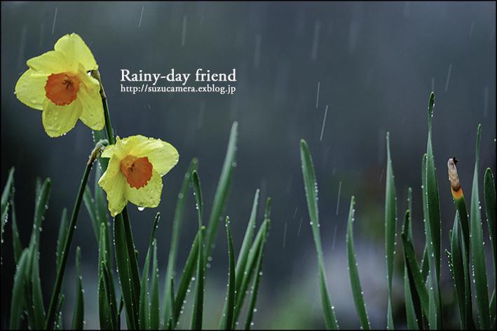 Rainy-day friend_f0100215_0162017.jpg