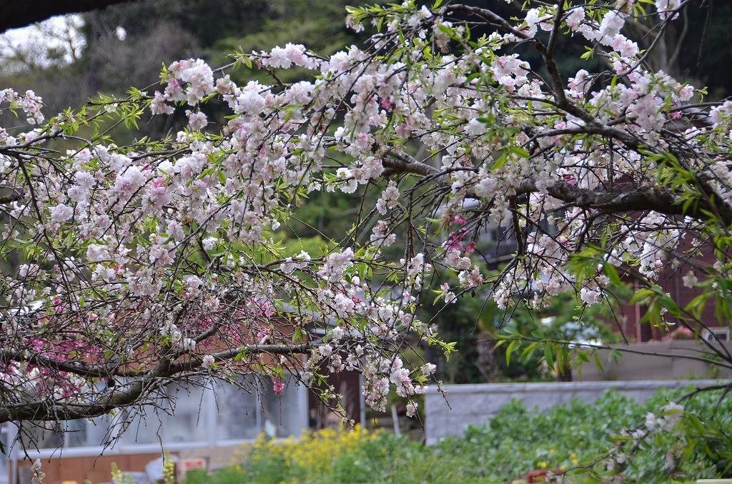 5月ちかしな風景_d0065116_19581737.jpg
