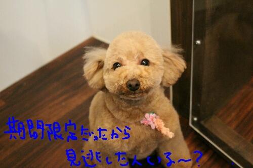 最高♪_b0130018_1410179.jpg
