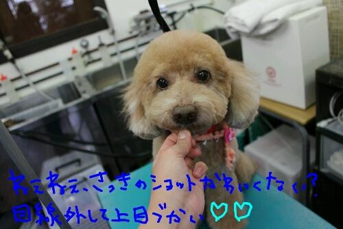 最高♪_b0130018_14125561.jpg