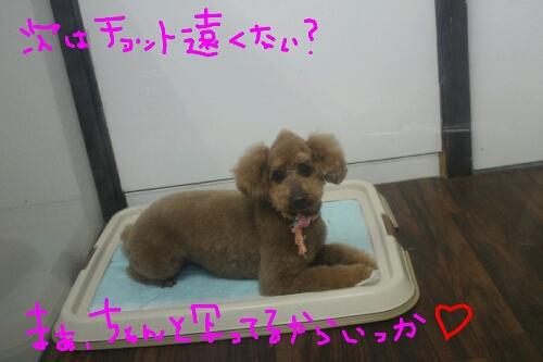 最高♪_b0130018_1450727.jpg