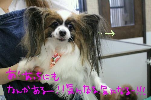 最高♪_b0130018_20423259.jpg