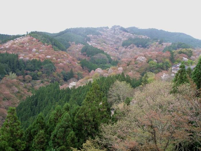 吉野山 千本桜 & 京の遅咲き 桜旅 _d0150720_164625.jpg