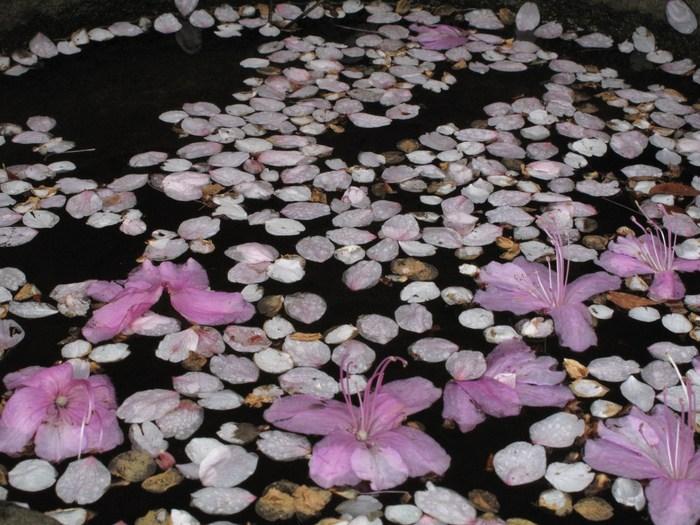 吉野山 千本桜 & 京の遅咲き 桜旅 _d0150720_17192049.jpg