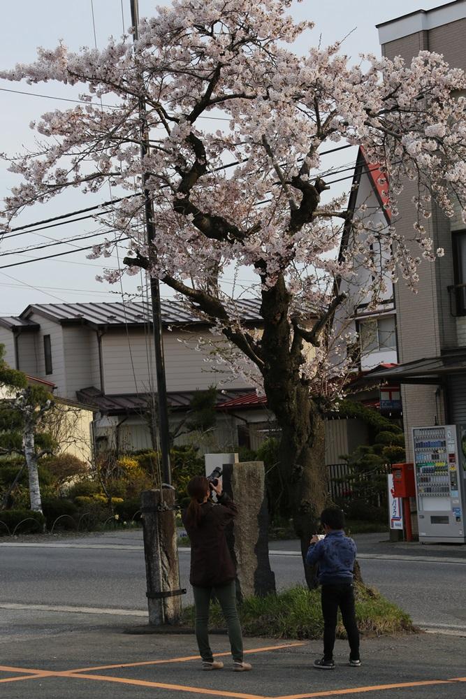 花盛り_c0111229_18332484.jpg