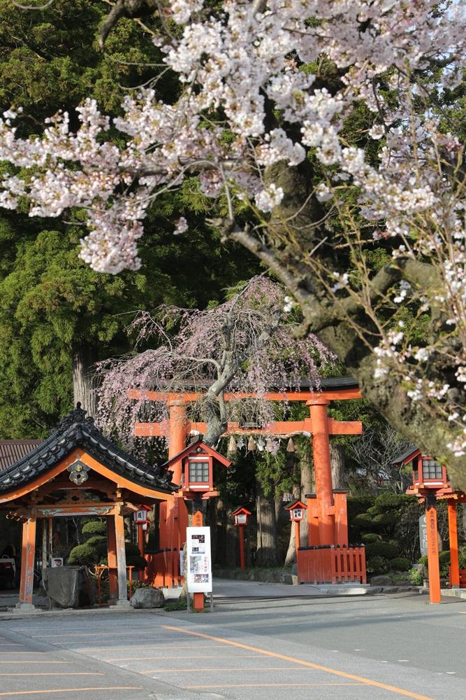 花盛り_c0111229_1834312.jpg