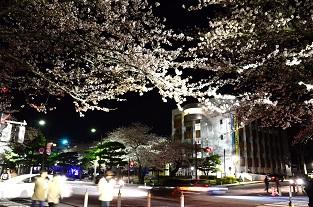 十和田のさぐら_c0299631_22535718.jpg