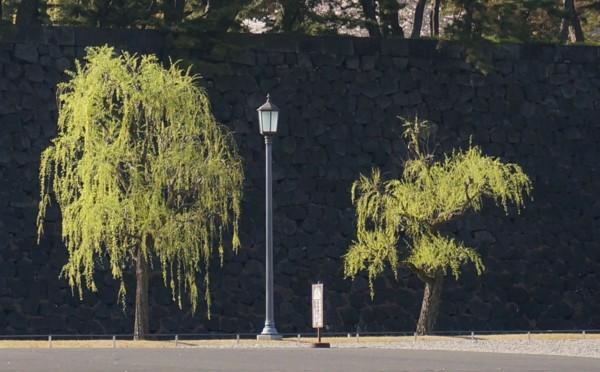 桜に負けない新緑の柳_f0055131_10321031.jpg