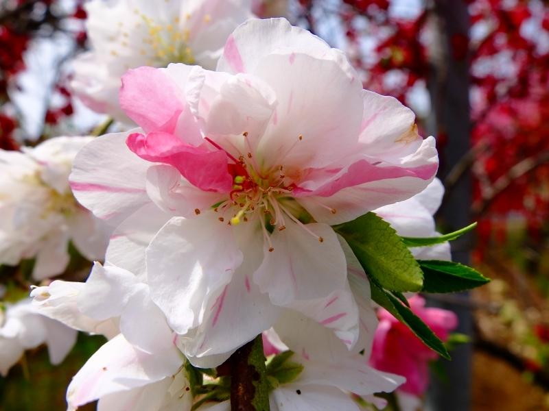 春爛漫 FUJIFILM X30スーパーマクロ_f0050534_08201253.jpg