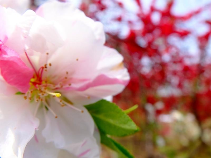 春爛漫 FUJIFILM X30スーパーマクロ_f0050534_08201265.jpg