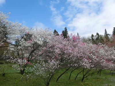 「花の寺」視察_f0019247_21365134.jpg