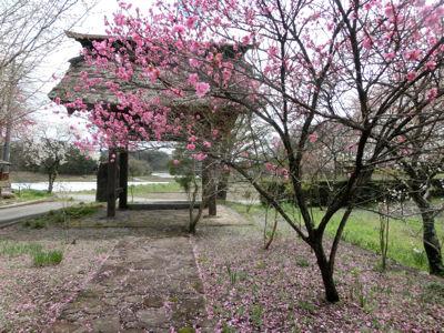 「花の寺」視察_f0019247_21554338.jpg