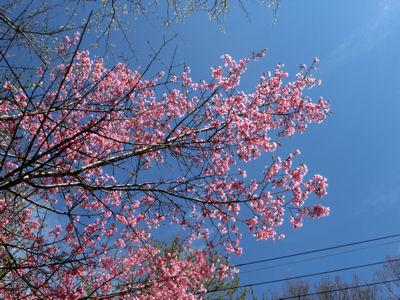 「花の寺」視察_f0019247_21583326.jpg