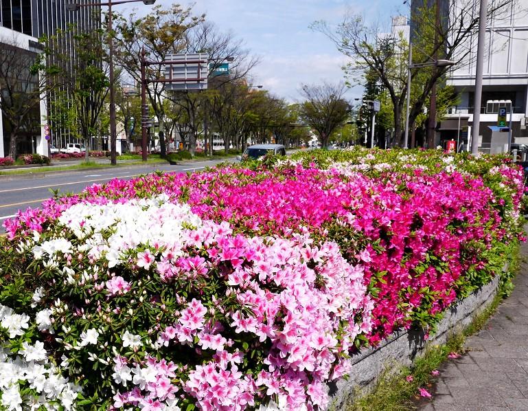 和歌山便り_b0093754_1944258.jpg