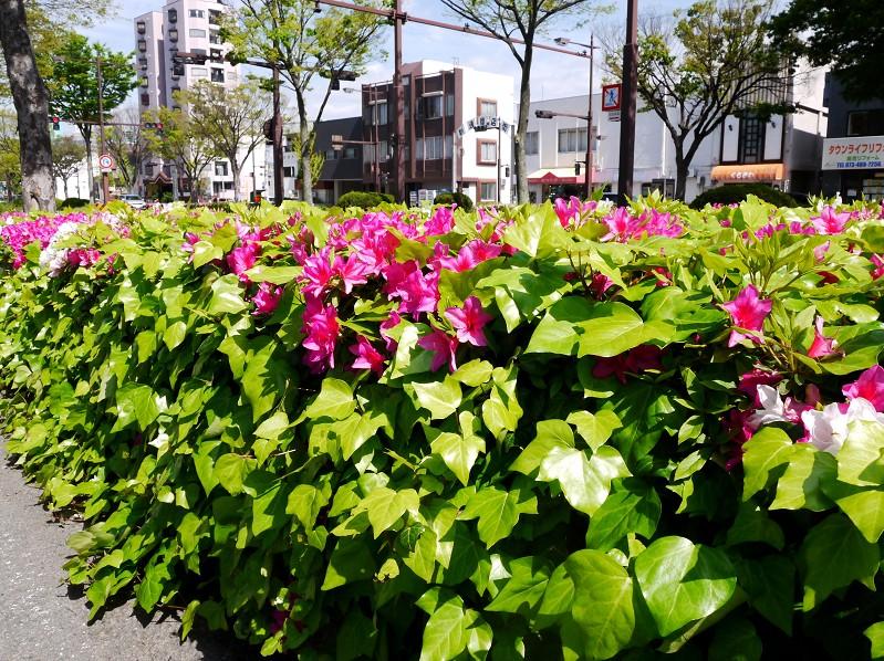 和歌山便り_b0093754_1952437.jpg