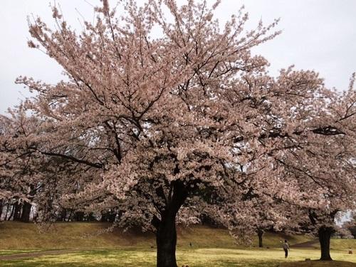 花見 ~in石川町~_e0211357_9383838.jpg