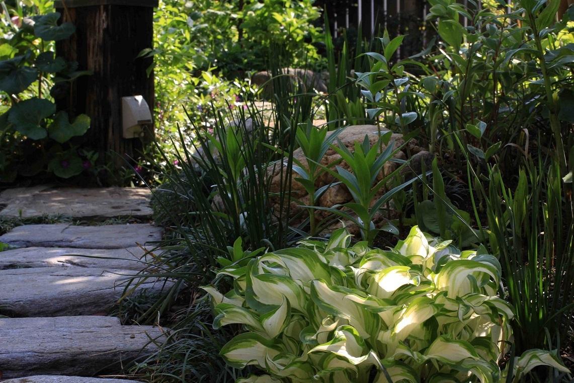 一日中、庭仕事をしました_a0107574_19463573.jpg