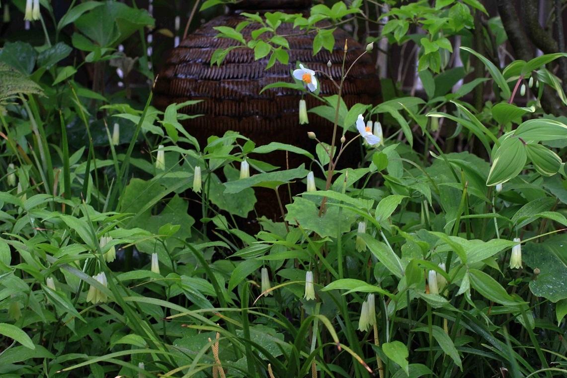 一日中、庭仕事をしました_a0107574_19560258.jpg