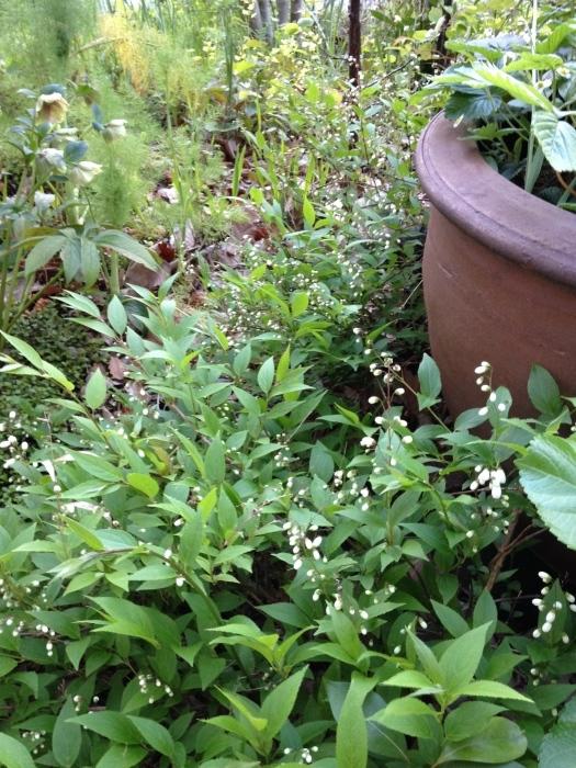 Keyaki Garden 0415_b0167282_00375607.jpg