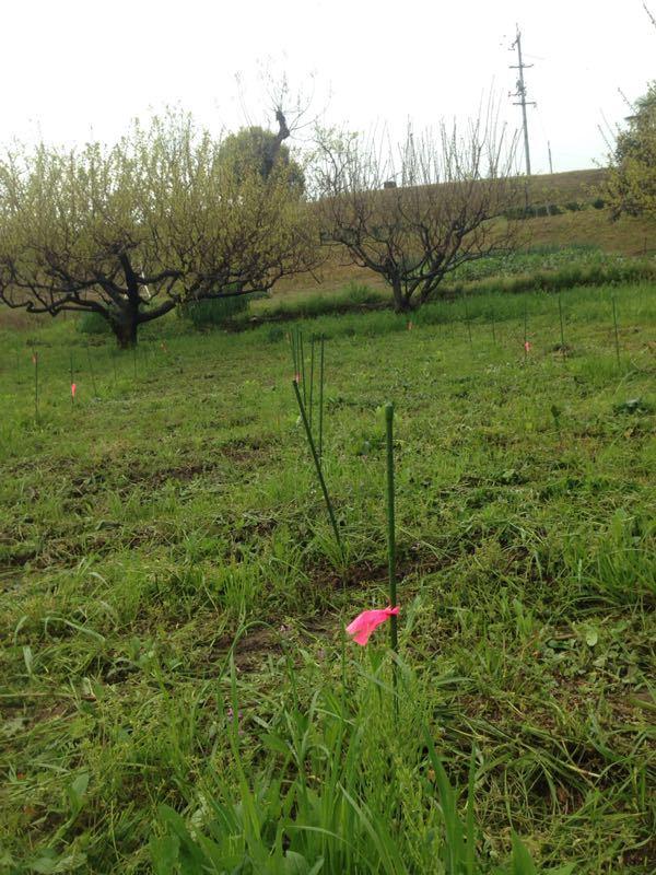 福山でChardonnay植樹!!_e0202291_6501776.jpg