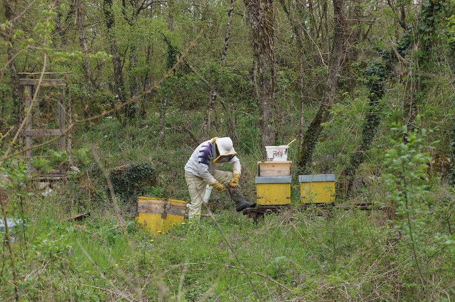 趣味の養蜂_f0106597_22293222.jpg