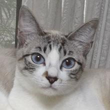愛猫の避妊と去勢手術_b0114798_16411458.jpg