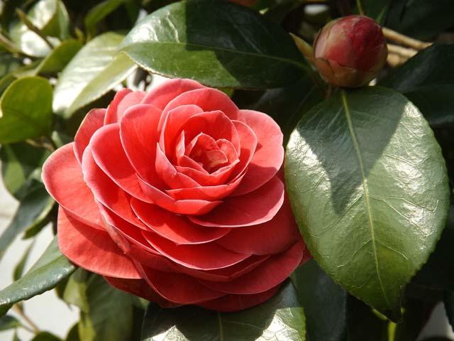 庭の花桃が咲きました_f0019498_1633827.jpg