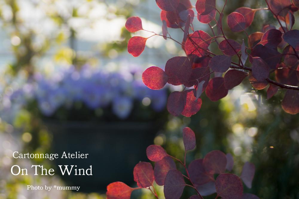 気持ちのいい朝に、ベランダコンテナガーデンのお花達_d0154507_09340815.jpg