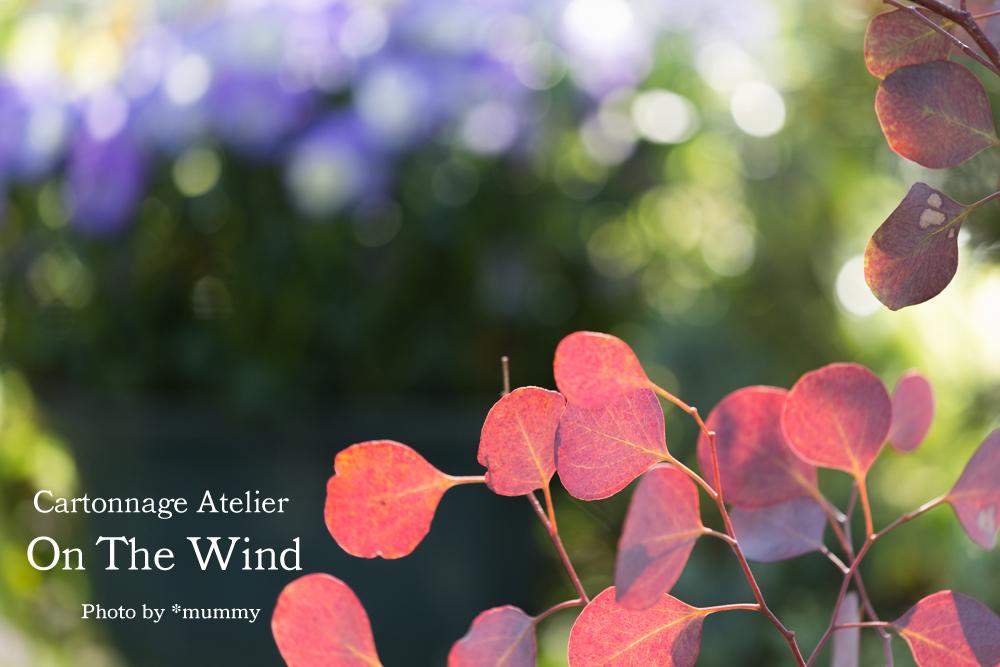 気持ちのいい朝に、ベランダコンテナガーデンのお花達_d0154507_09342424.jpg