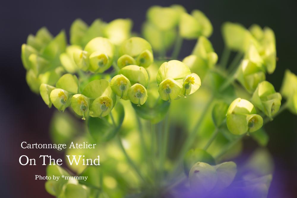 気持ちのいい朝に、ベランダコンテナガーデンのお花達_d0154507_09344123.jpg