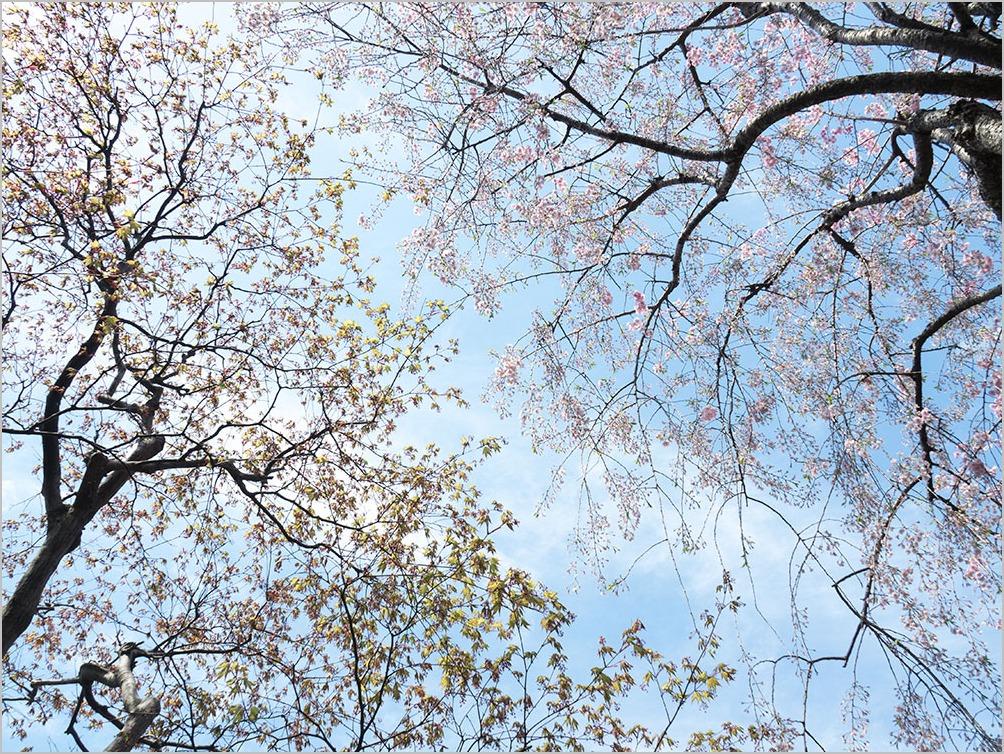 庭の春に spring time #OLYMPUS OM-D E-M5II_c0065410_21122617.jpg