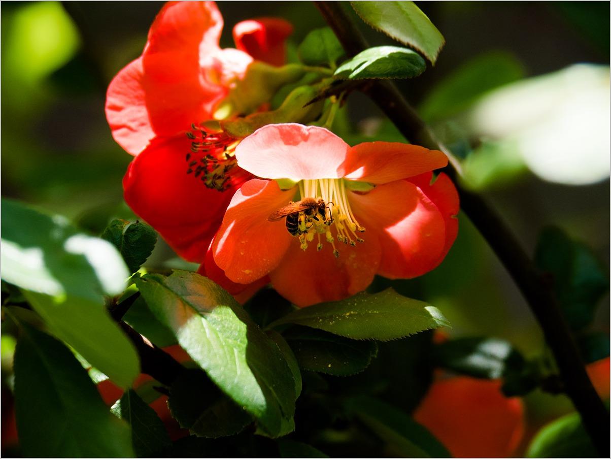 庭の春に spring time #OLYMPUS OM-D E-M5II_c0065410_21274078.jpg